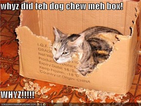 whyz did teh dog chew meh box!  WHYZ!!!!!