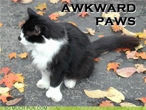 Awkward Paws
