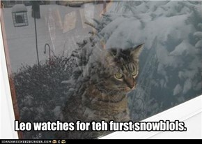 Leo watches for teh furst snowblols.