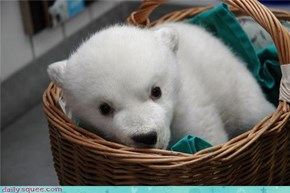 Polar Bear Delivery