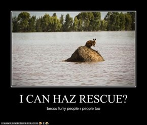 I CAN HAZ RESCUE?