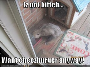 Iz not kitteh...  Want cheezburger anyway!