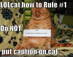 LOLcat how to Rule #1 Do NOT  put caption on cat.