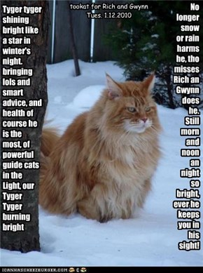 Tyger tyger shining bright like a star in winter's night. bringing lols and smart advice, and health of course he is the most, of powerful guide cats in the Light, our Tyger Tyger burning bright