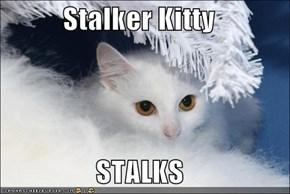 Stalker Kitty  STALKS