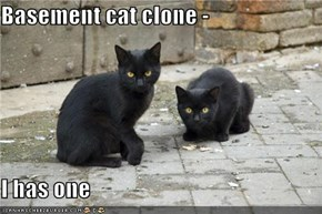 Basement cat clone -  I has one