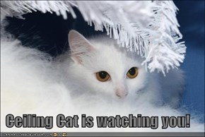 Ceiling Cat is watching you!