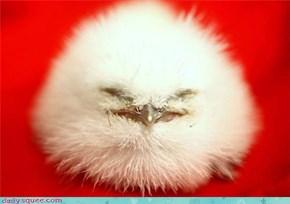 I'm Not a Snowball!
