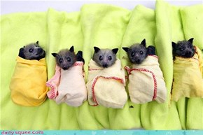 Batty-ritos!