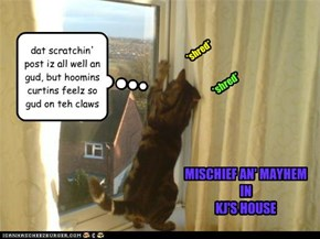 dat scratchin' post iz all well an gud, but hoomins curtins feelz so gud on teh claws