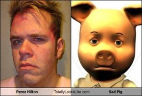 Perez Hilton Totally Looks Like Sad Pig