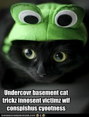 Undercovr basement cat