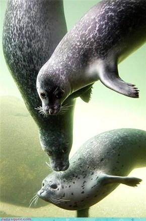 Seal Posse