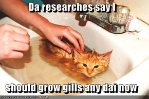 Da researches say I  should grow gills any dai now