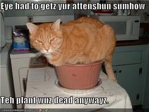 Eye had to getz yur attenshun sumhow  Teh plant wuz dead anywayz.