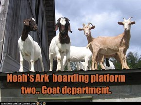 Noah's Ark  boarding platform two.. Goat department.