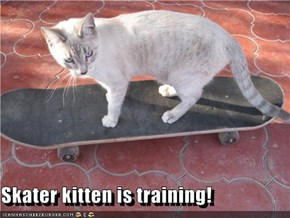 Skater kitten is training!