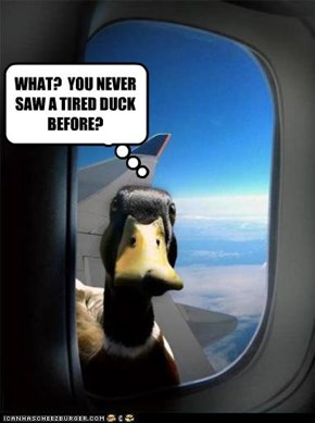 WHAT?  YOU NEVER SAW A TIRED DUCK BEFORE?