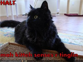 HALT  mah kitteh senses r tinglin