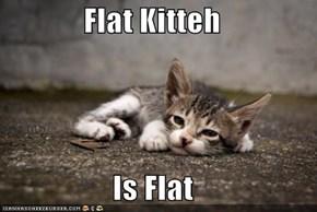 Flat Kitteh  Is Flat