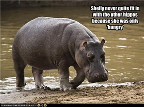 Shelly never quite fit in with the other hippos because she was only 'hungry'