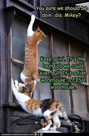 Cat-Burglars