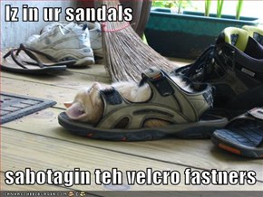 Iz in ur sandals   sabotagin teh velcro fastners