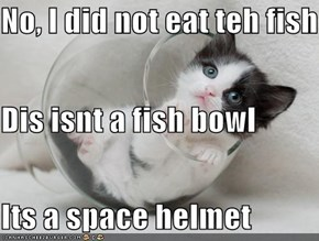 No, I did not eat teh fish Dis isnt a fish bowl Its a space helmet