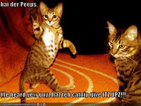 hai der Peeps  We heard yew guyz haz teh catnip give ITZ UPZ!!!