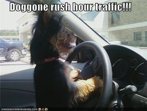 Doggone rush hour traffic!!!