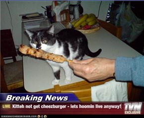 Breaking News - Kitteh not get cheezburger - lets hoomin live anyway!