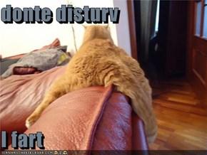 donte disturv  I fart