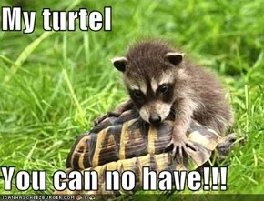My turtel  You can no have!!!