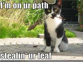 I'm on ur path  stealin' ur leaf