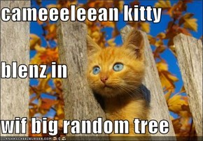cameeeleean kitty blenz in wif big random tree