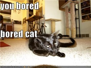 you bored bored cat