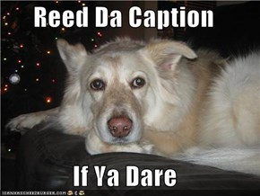 Reed Da Caption   If Ya Dare
