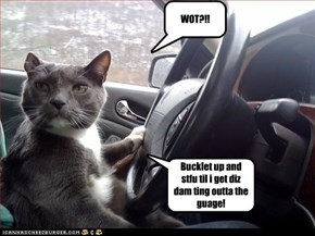 driving kitteh