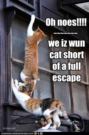 we iz wun cat short  of a full escape
