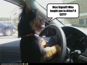 Nice Signal!! Who taught you to drive? A CAT!?