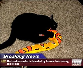 Breaking News - the bordom snake is defeated by his one true enemy, the lol cat