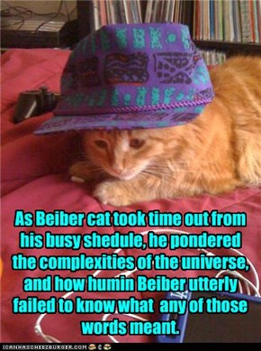 Cat Beiber does sum ponderin.....