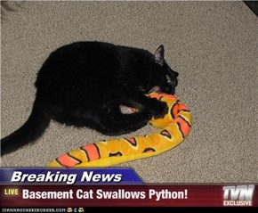 Breaking News - Basement Cat Swallows Python!