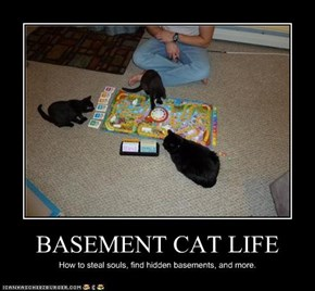 BASEMENT CAT LIFE