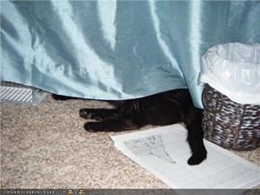 Burglar Cat