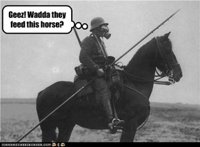 Geez! Wadda they feed this horse?