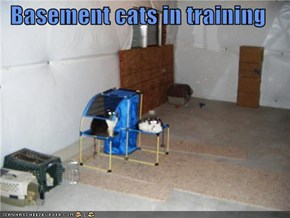 Basement cats in training