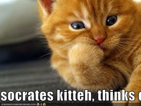 socrates kitteh, thinks of the meeaning of life