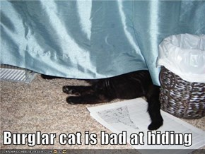 Burglar cat is bad at hiding