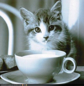 Cyoot Kitteh of teh Day: Milk Duz Mah Bodee Gud